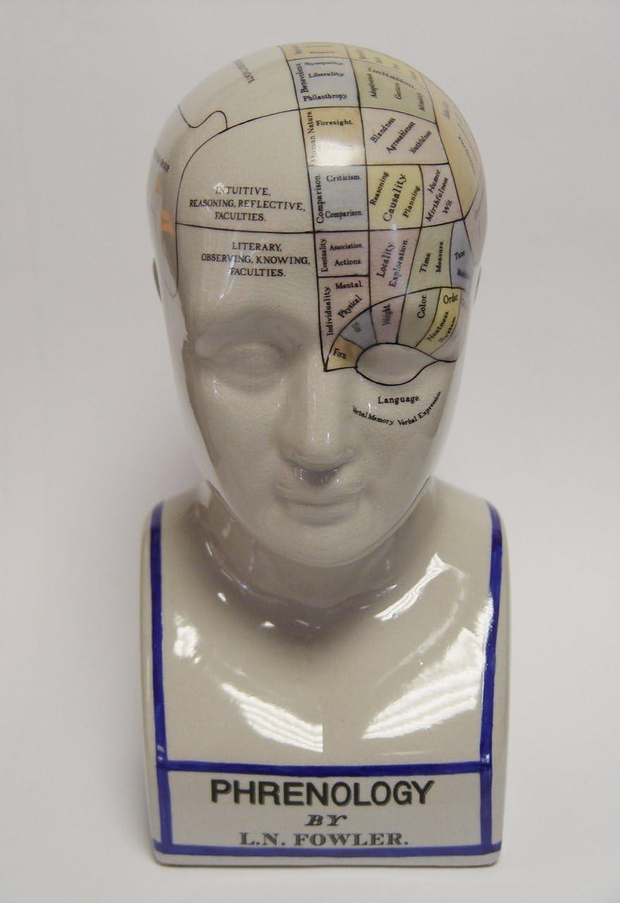 Decorative Head Sculpture Bust Phrenology Head Design Gauge Porcelain Height 30/Ã/'/Â/cm 1.7kg by Decoratie