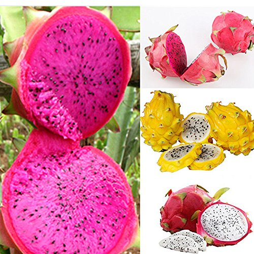 XKSIKjian's Garden 200Pcs Mixed Pitaya Dragon Fruit Seeds Ornamental Plant Home Yard Office Decor Non-GMO Seeds Open Pollinated Seeds for Planting