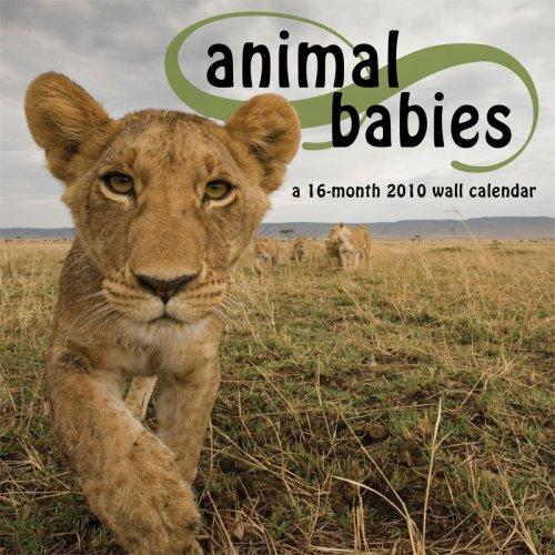 ANIMAL BABIES 2010 Wall Calendar