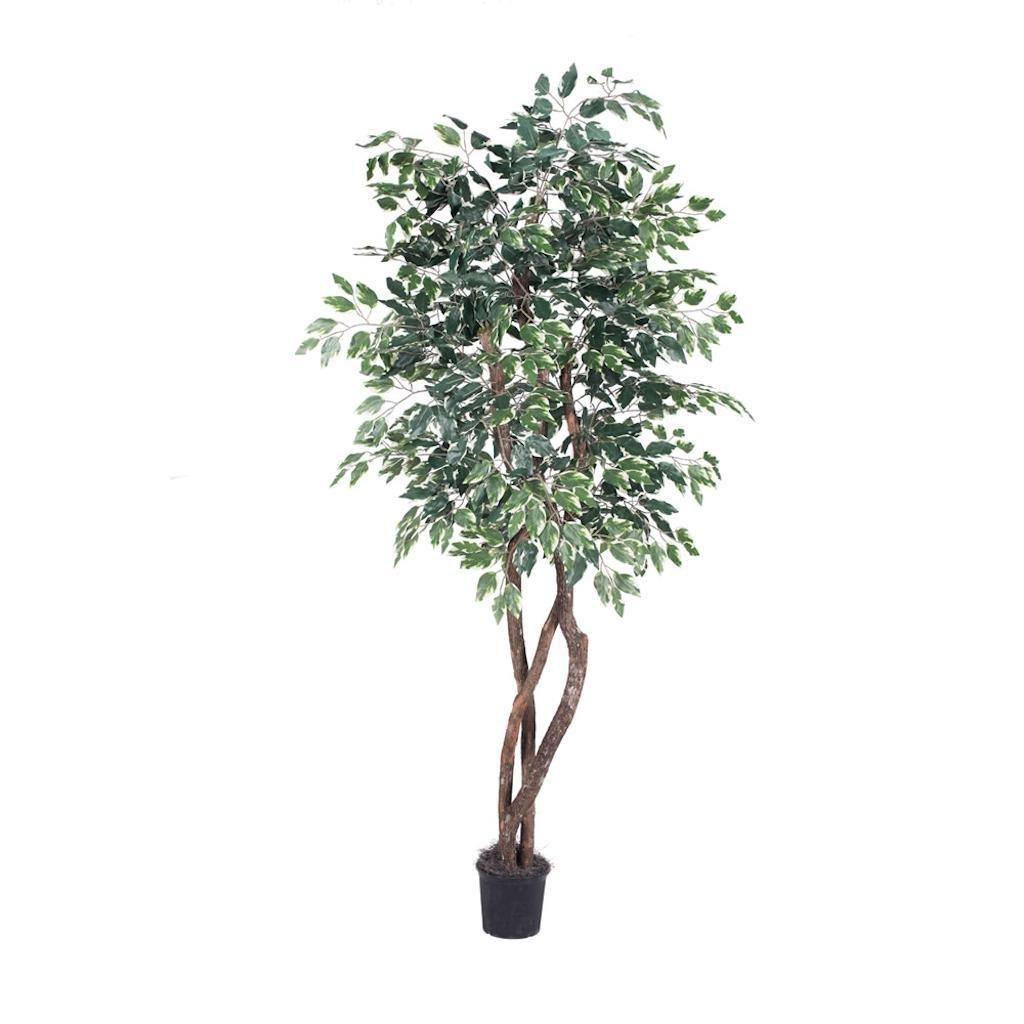 Vickerman THE0260-07 Green Variegated Ficus Everyday Tree