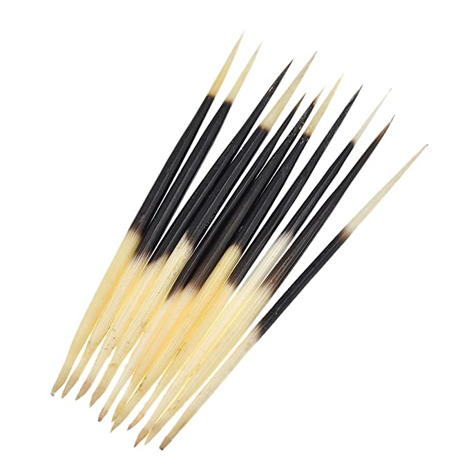 PEPPERLONELY 10PC South Africa Porcupine Quills 5 Inch ~ 7 Inch
