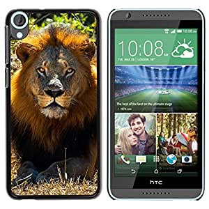 Caucho caso de Shell duro de la cubierta de accesorios de protección BY RAYDREAMMM - HTC Desire 820 - Lion Sun Summer Mane Africa Savannah Nature