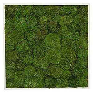 GreenRoad Wooden Frame Natural Preserved Pole Moss Wall Hanging - Green