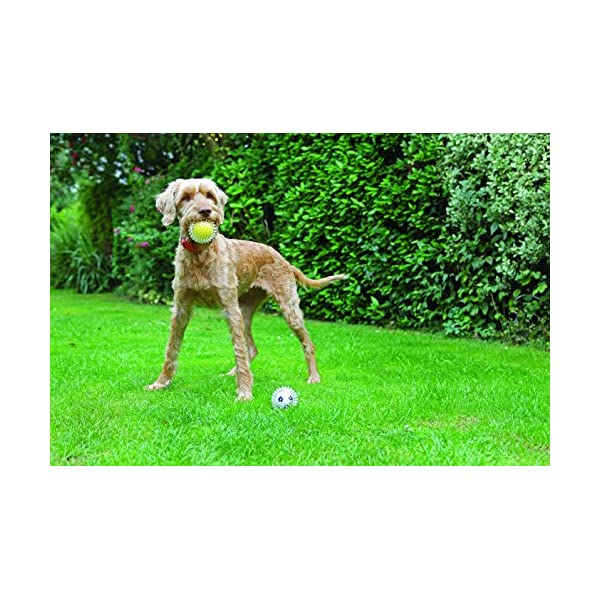 Rosewood Jolly Doggy Catch and Play Tennis Ball for Dogs 3