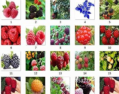Sale!High Quality Raspberry Seed 200pcs/pack Big Raspberry Seeds Fruit Seeds flower pots Strawberry bonsai Blackberry Bonsai See
