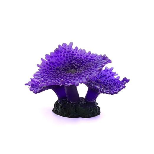 Amazon.com : eDealMax púrpura tres cepas brillantes efectos ...