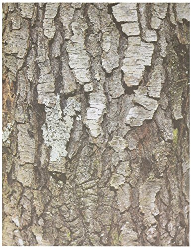 Roylco Terrific Tree Craft Paper (32 Sheets)]()