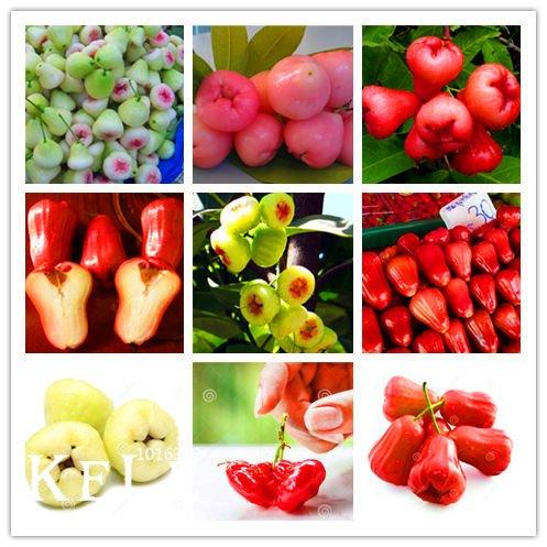Big Sale!100 PCS/bag rose apple seeds rare fruit seeds for home garden planting easy grow,#WCK6SL SVI