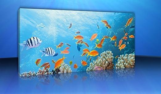 Leinwandbild Kunst-Druck 100x50 Bilder Tiere Korallenriff