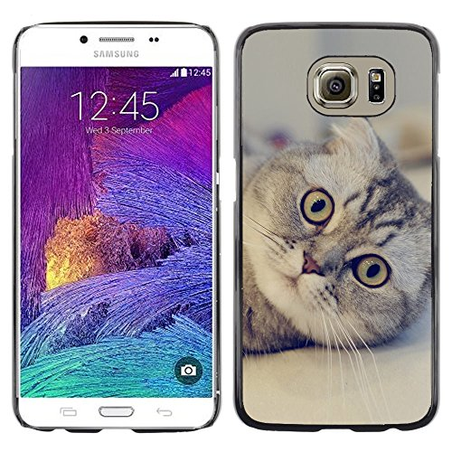 STPlus Gato en una caja Animal Carcasa Funda Rigida Para Samsung Galaxy S6 #20