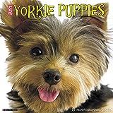 Just Yorkie Puppies 2018 Calendar