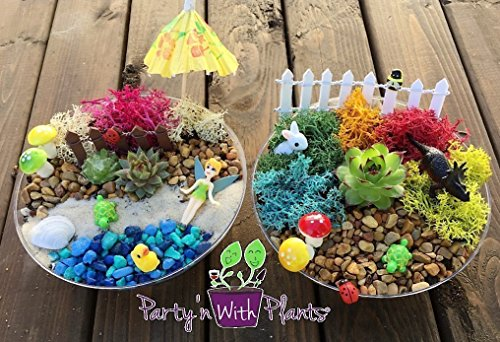 Fairy Garden Kit with a REAL Succulent from Party'n With Plants