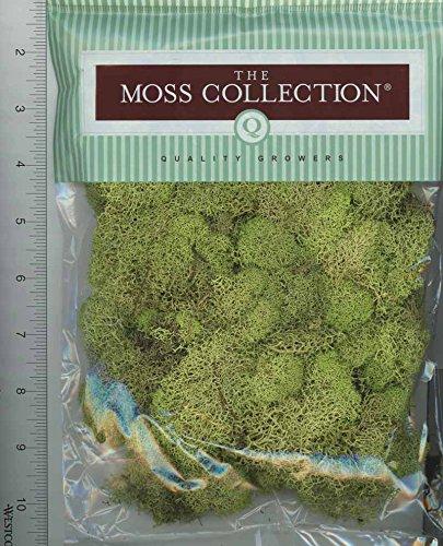 (Dollhouse Miniature Preserved Reindeer Moss)