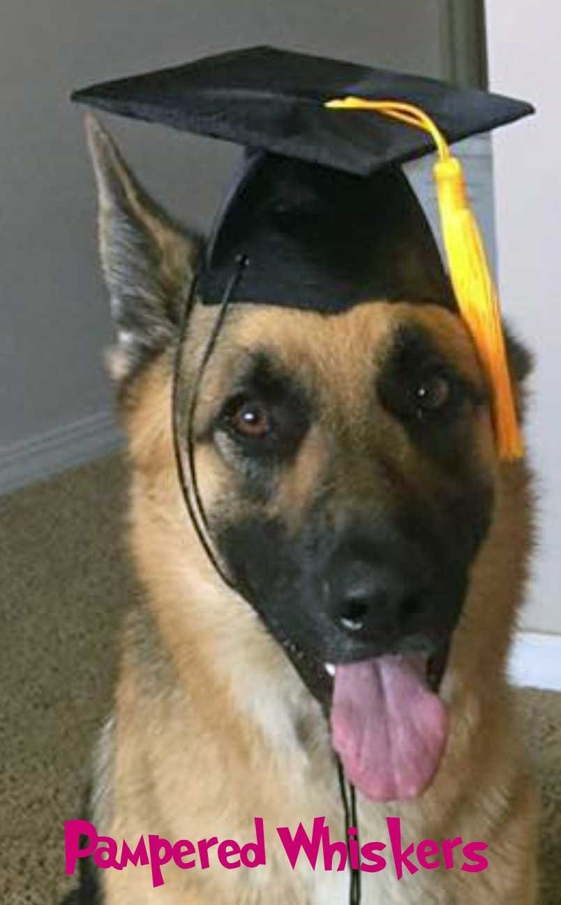 The Graduate - Black Graduation Cap for dogs and cats