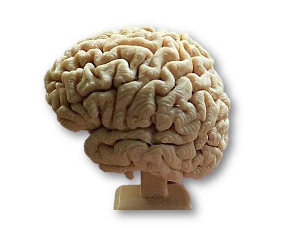 Prototype 3D Human Brain Anatomy Structure Model for Medical ...