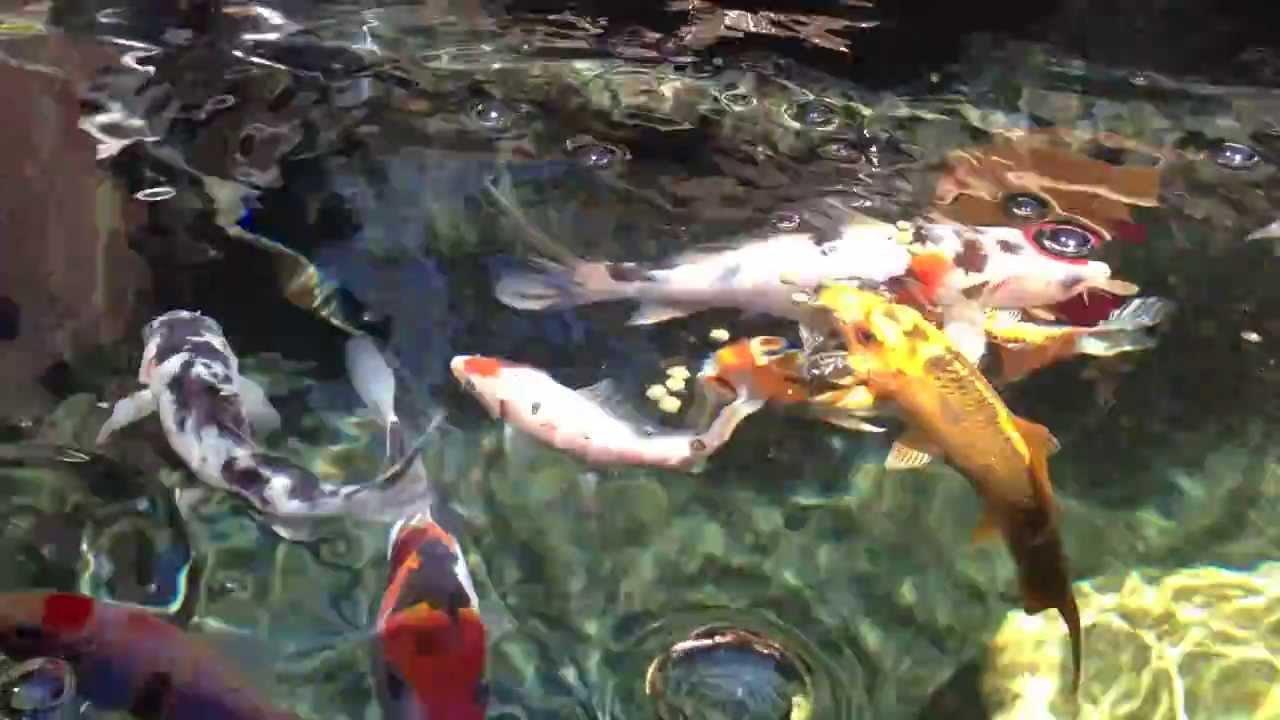 Clearwater jardín estanque de peces Koi cartucho filtro de acuario Medios de comunicación tamaño mediano zeolita 9 - 16 mm clinoptilolita Crystal Clear ...