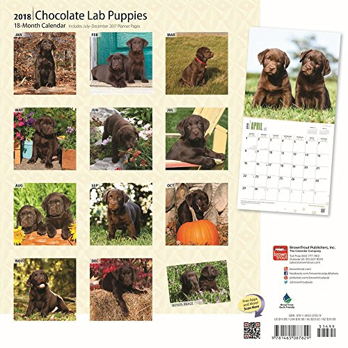 Chocolate Labrador Retriever Puppies 2018 Wall Calendar Photo #3