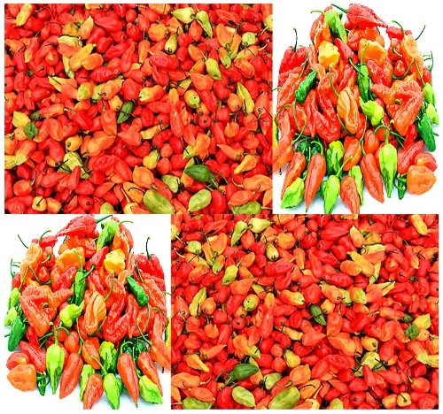 5 x Bhut Jolokia AKA Ghost Pepper Seeds - Certified in 2007 as the hottest chile pepper in the world by The Guinness Book of World Records at over 1 - Chile 2007