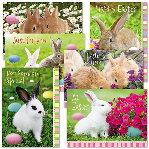 Photo Bunny Easter Cards - Set of 12 (6 designs) Large Quality 5
