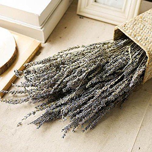 Asdomo 4 Bundles Lavender Bundle Natural Dried Lavender Bundles, Freshly Harvested Royal Velvet Lavender Bundles for DIY Home Party Wedding Decor ()