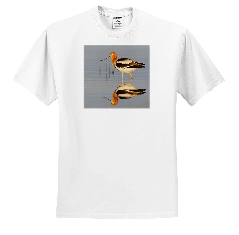 ts/_314988 3dRose Danita Delimont American Avocet at Dawn Birds Adult T-Shirt XL