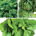 Burpee Summer Long Salad Collection Lettuce Seeds 3 packets of seed.
