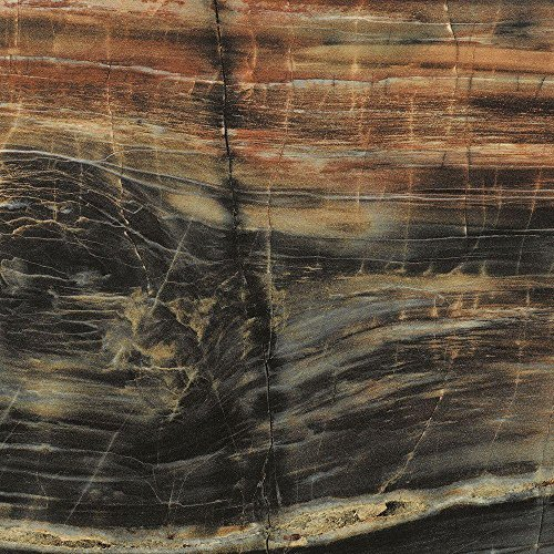 Formica Brand Laminate 034741246408000 Petrified Wood Laminate, Petrified Wood Etchings