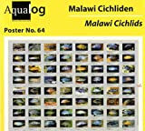 AQUALOG Fold Poster: Malawi Cichlids