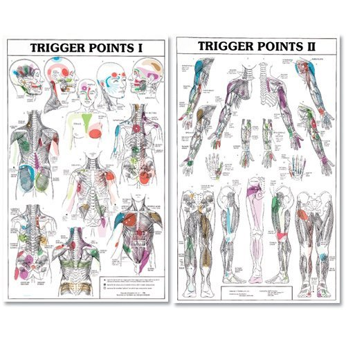 Trigger Points I and II Laminated Chart/Posters ()