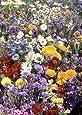Tropica - fiori campo pirenei colori provenza (27 generi) 1000 semi