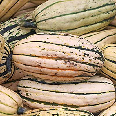 Delicata Winter Squash Garden Seeds - Non-GMO, Heirloom - Vegetable Gardening Seed