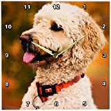 Cheap 3dRose dpp_90839_2 Massachusetts, Reading, Labradoodle Dog – US22 JEN0071 – Jim Engelbrecht – Wall Clock, 13 by 13-Inch