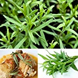C&C Products 10pcs Tarragon Seed Artemisia dracunculus Seed