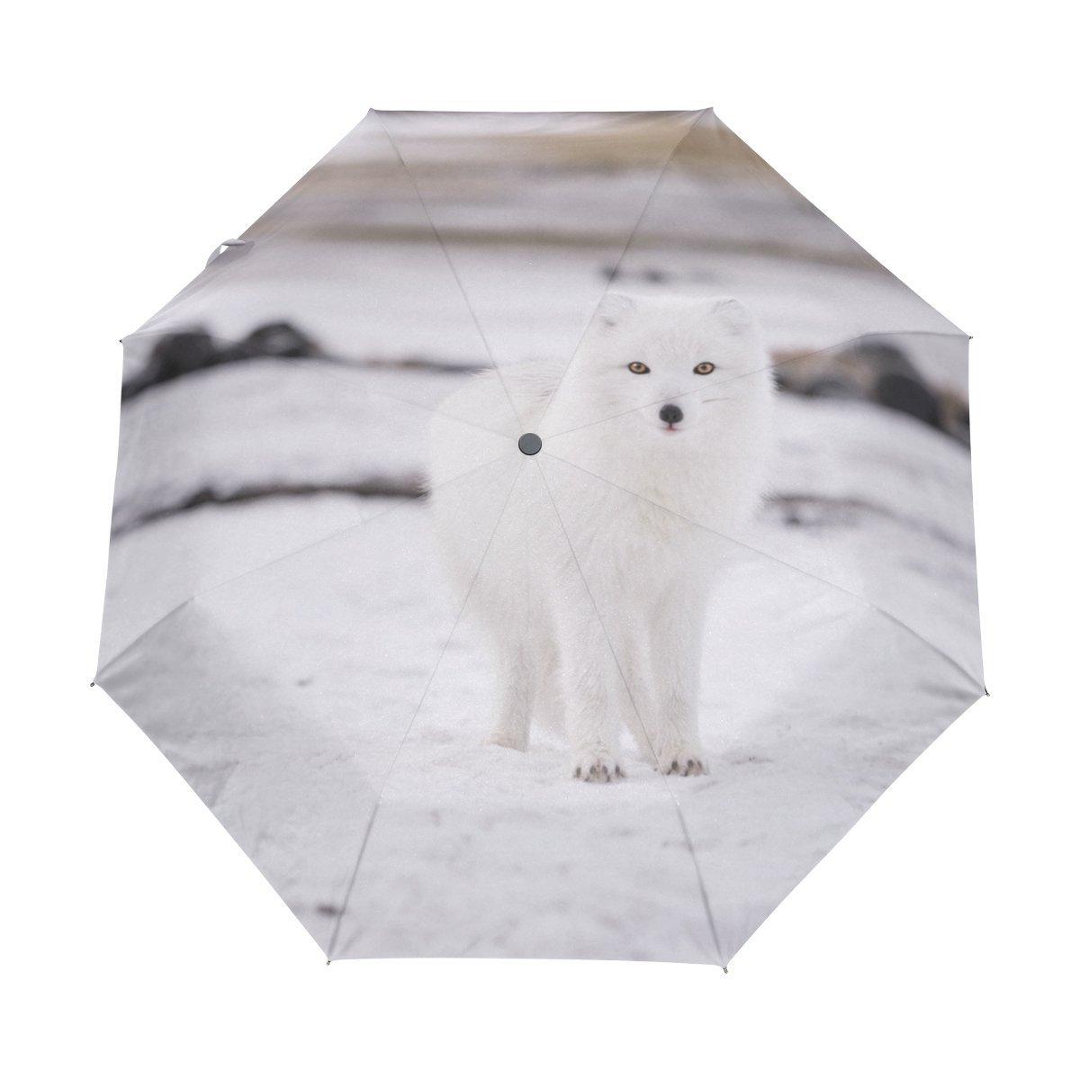 Ieararfre Arctic Fox - Paraguas Compacto de Viaje Resistente al Viento y al Viento, Impermeable, Apertura automática y botón de Cierre: Amazon.es: Deportes ...