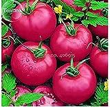 new girl tomato - New Heirloom 'Pink Girl' Big Bunches of Tomato, 100 + Seeds