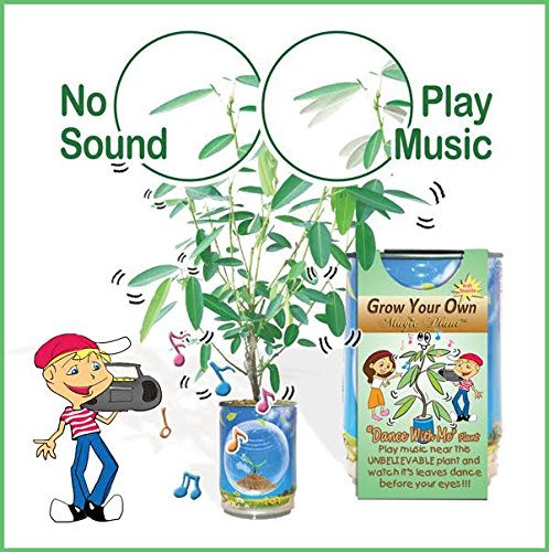 Magic Plant - Dance With Me Plant - Dances to Music