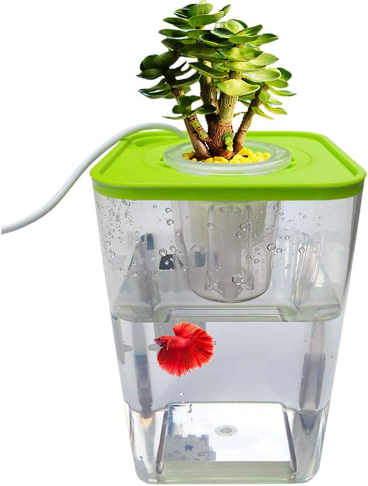 WAWLIVING Betta Fish Tank Desktop Mini Aquaponic Ecosystem Planter Water Garden Hydroponic Growing System