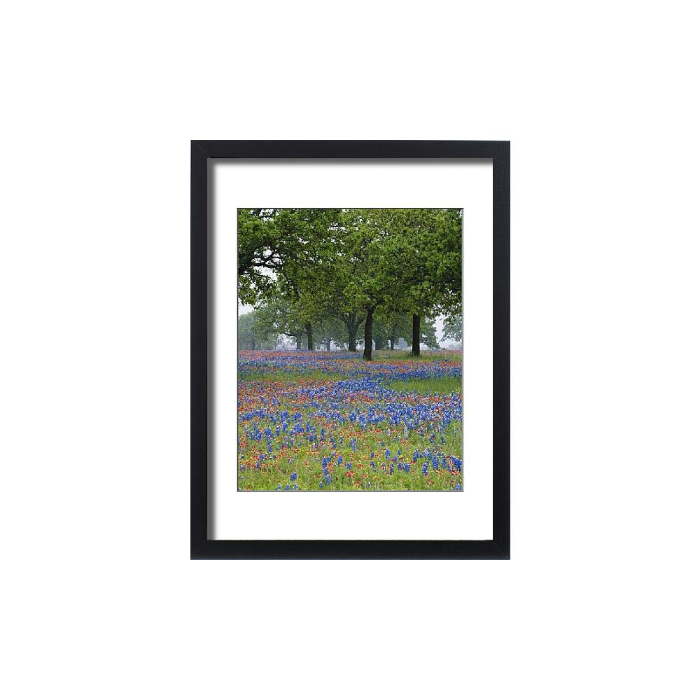 Media Storehouse Framed 24x18 Print of Texas, Texas Hill Country, Texas Paintbrush and Bluebonnets (5788472)