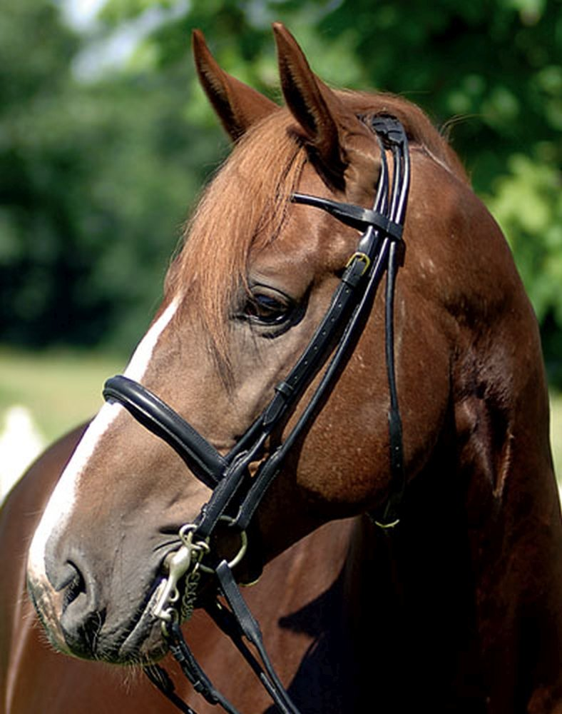 Black M Black M Hkm ROLLED LEATHER DOUBLE BRIDLE