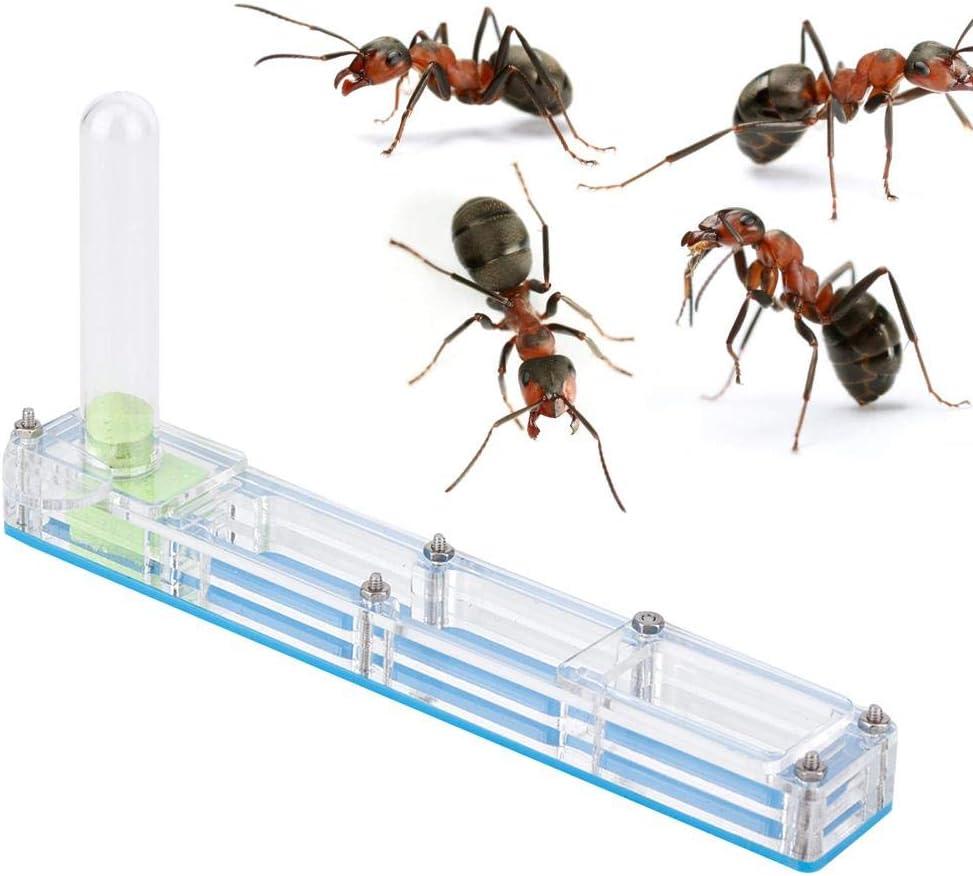 Liukouu Granja de Hormigas, Insecto Hormiguero Nido Granja alimentación Caja formicario Educativo, hábitat para Hormigas vivas, ecosistema de alimentación de Hormigas(Azul)