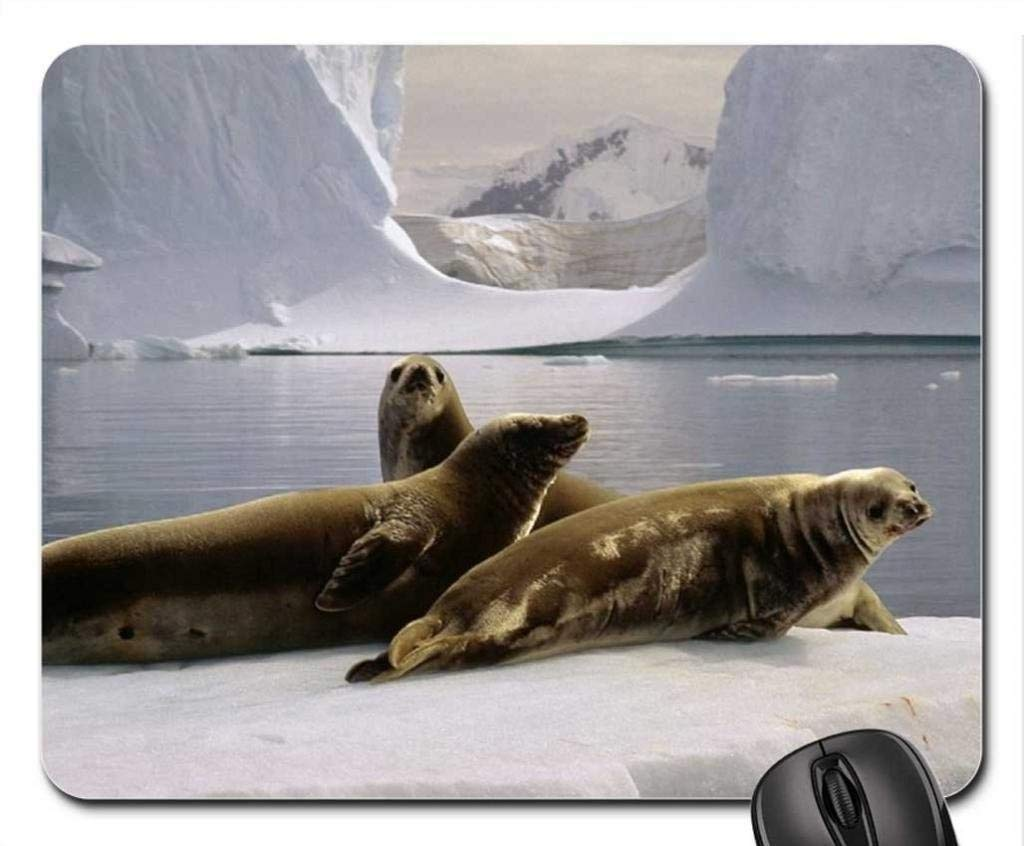 Yanteng Sella el cojín de ratón de Polo Norte, Alfombrilla De ...