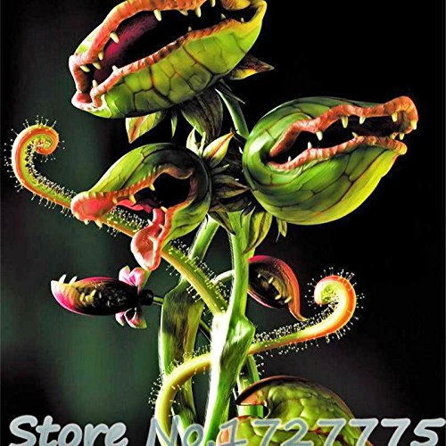 Home Garden 20 Plants Venus Fly Trap Muscipula Carnivorous Plant Plants DIY Plant