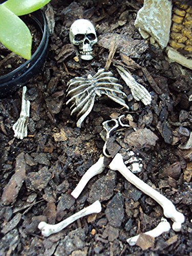 Fiddlehead Fairy Village -9 Pc. Skeletal Remains (Collection Halloween Movie Scary Village)