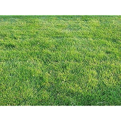 Zoysia Grass Seeds-Zoysia Emerald Grass-1/8 lb : Garden & Outdoor