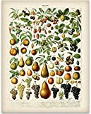 Fruits Botanical in French Art Print - 11x14 Unframed Art Print - Great Wall Decor for Your Kitchen
