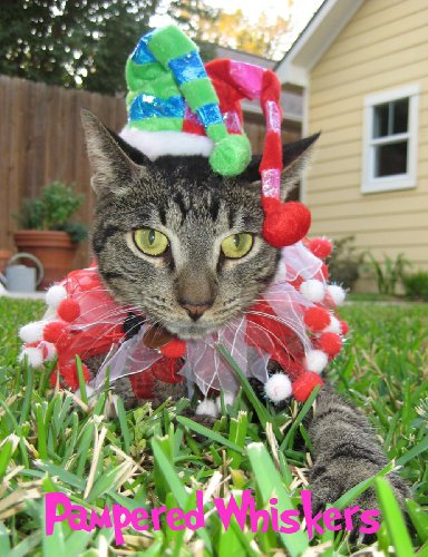 (Pampered Whiskers Jester hat and party collar for cats and dogs with 10-12