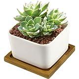 All' ingrosso Vasi per Fiori, Y & M (TM) Eleganza interna per casa e vasi da fiori in ceramica Piante Vaso per piante grasse e cactus con vassoio in bambù
