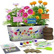 Dan&Darci Paint & Plant Flower Growing Kit - Grow Cosmos, Zinnia, Marigold Flowers : Includes Everythi