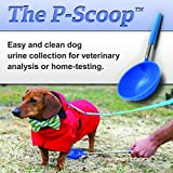 Best Antibiotic For Urinary Tract Infection In Dogs