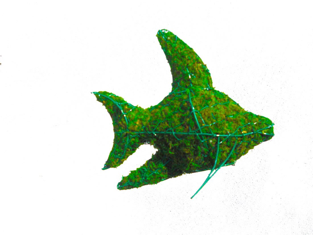 Fish 8 inches high x 10 inches long x 4 inches wide w/ Moss Topiary Frame , Handmade Animal Decoration